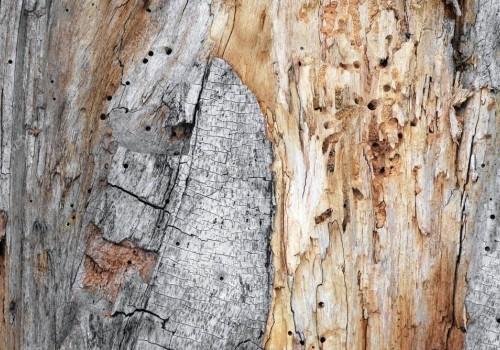 Биологическая коррозия древесины: что это такое, методы защиты