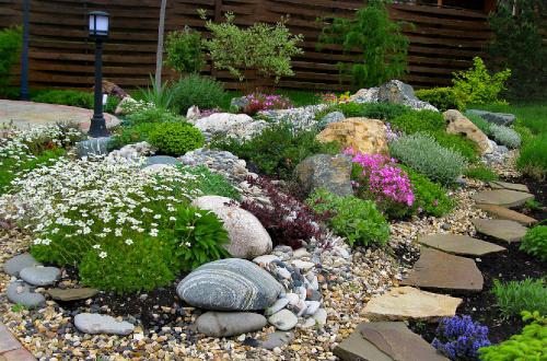 Каменистый сад с тысячелистником